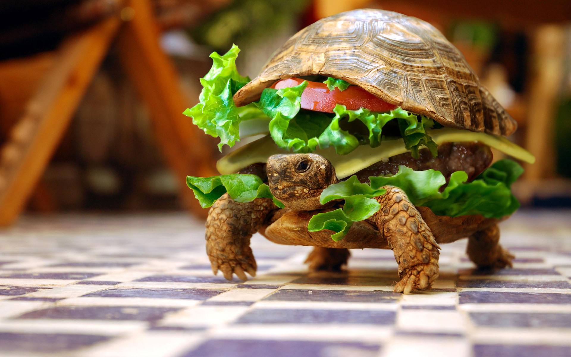 The Very Best Kinds Of Family Pet Turtles